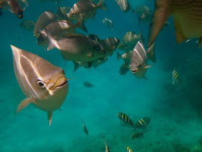 Kolumbien San Andres Fische