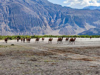 Indien Ladakh Nubra tal