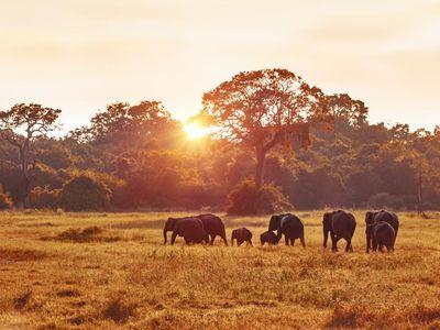 Sri Lanka Minneriya Kaudulla Sonnenuntergang Safari