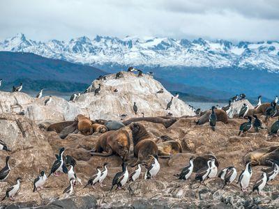 Argentinien Ushuaia Tiere iStock 479862842