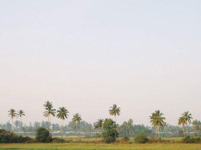 indien goa reisfelder und palmen