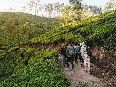 Indien Munnar Teeplantage Wanderung Reisegruppe Gruppenreise