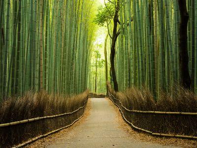 Reise Japan -  Bambuswald Arashiyama Kyoto - iStock 538811116