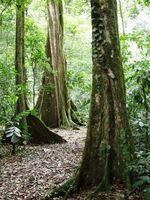 rainforest 17 TilGgYx