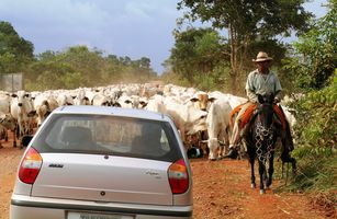 Brasilien Pantanal Auto Kachelbild